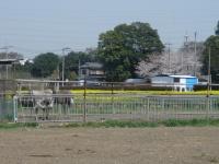 Dsc03511
